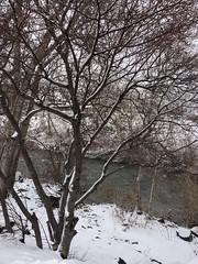 IMG_2189 (augiebenjamin) Tags: winter provocanyon mountains orem provo lindon utah snow clouds trees sky byu brighamyounguniversity art