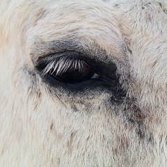 Gaze (studioferullo) Tags: abstract art beauty bright colorful colors contrast design detail light minimalism natural outdoor outside perspective pretty scene serene tranquil study sunlight sunshine texture tone world arizona tubac horse animal ranch eye white
