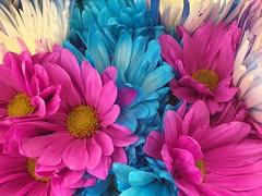 TOL on the radio, 10:53am 3/1/17 (f l a m i n g o) Tags: explore song thinkingoutloud flowers
