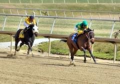 "2017-03-03 (14) r1 Julian Pimentel on #3 I Just Wanna Win (JimFleenor) Tags: photos photography md maryland laurelpark marylandracing horseracing jockey جُوكِي ""赛马骑师"" jinete ""競馬騎手"" dżokej jocheu คนขี่ม้าแข่ง jóquei žokej kilparatsastaja rennreiter fantino ""경마 기수"" жокей jokey người horses thoroughbreds equine equestrian cheval cavalo cavallo cavall caballo pferd paard perd hevonen hest hestur cal kon konj beygir capall ceffyl cuddy yarraman faras alogo soos kuda uma pfeerd koin حصان кон 马 häst άλογο סוס घोड़ा 馬 koń лошадь outside outdoors julianpimentel"