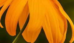 Floral abstract (Steve-h) Tags: stephensgreen nature natura naturaleza abstract macro blossom petals stalk stem depthoffield dof bokeh park ststephensgreen dublin ireland europe summer september 2015 steveh