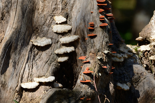 mushroom in a tree trunk