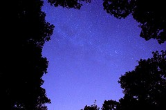 Night time Retreat (robertd_herrera) Tags: trees night stars twinkle