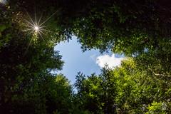 _Q8B3347.jpg (sylvain.collet) Tags: wood trees wild france nature forest arbres trunk fort bois feuilles sauvage souches troncs hautecorrze