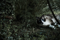Into the wild (Marianna ) Tags: pet cats pets cat animali animale