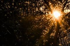 Last Light (Gavin.Rudge) Tags: sunset sun star evening aperture peaceful f22 burst starburst