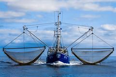 Kutter SD 13 vor Büsum (chrisar676) Tags: canon eos ship northsea schiff kutter büsum fischkutter sd13 krabbenkutter 60d canon60d canoneos60d canonef70200mm14lusm eos60d