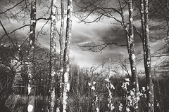 IMG_1516 1937 (Dan Correia) Tags: 15fav topv111 clouds topv555 topv333 infrared belchertown cannonef35mmf2
