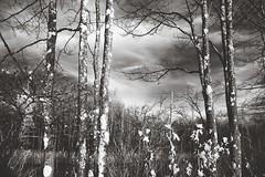 IMG_1516 1937 (Dan Correia) Tags: belchertown infrared clouds topv111 15fav topv333 topv555 canonef35mmf2 510fav topv777 topv999 topv1111