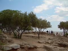 Acropolis hillside (mademoisellelapiquante) Tags: tree athens parthenon greece hillside acropolis ancientgreece ancientart
