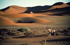 Namibia fauna + dunes © Namibia Tourism - www.fotoseeker.com