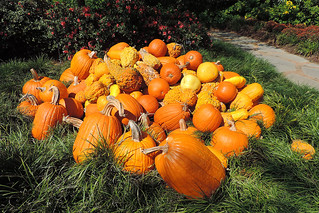 Dallas - Pumpkin Fest