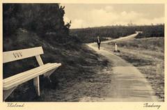 Vlieland - Badweg (Dirk Bruin) Tags: strand vlieland bos naar weg fietspad villapark badgasten ansichtkaart zandpad zeeweg strandweg strandhotel duinhuisjes karrenspoor speelweide landhuisjes badweg schelpenpad badpaviljoen
