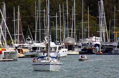 IMG_5886 (LoxPix2) Tags: panorama birds landscape boat kayak sailing aircraft brisbane panoramic catamaran sail skiff loxpix