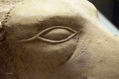 dogs eye (wsrmatre) Tags: art history archaeology museum arte expo egypt exhibition muse exposition histoire museo egipto historia egypte ancientegypt egyptology antiquity exposicin antiquit arqueologia archologie egiptologia antiguedad egyptologie antiguoegipto egypteancienne ericlpezcontini ericlopezcontini ericlopezcontinifoto ericlopezcontiniphoto ericlopezcontiniphotography wsrmatrephotography wsrmatre ericlpezcontiniexportareamanager