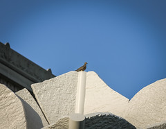 Bird on a Birdie (jhoff1257) Tags: city urban building art museum architecture midwest nelson kansascity missouri kc artmuseum nelsonatkins kcmo nelsonatkinsmuseumofart nelsonatkinsmuseum kcarchitecture