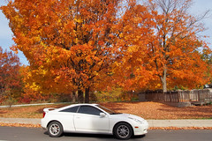 Toyota Celica GT and bright red trees - Autumn in Toronto's High Park (edk7) Tags: city autumn red urban toronto ontario canada colour tree fall nature car automobile highpark foliage vehicle 2015 sportcompactcar edk7 olympuspenliteepl5 toyotacelicagtzzt230