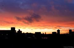 17:07:09 01.12.15 (jpmm) Tags: sunset amsterdam birds clouds vogels wolken cumulus zuid starlings stratocumulus 2015 spreeuwen