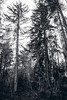 Trees (Kristaps Jansons) Tags: old winter camp cold army geocaching e soviet base ussr abondoned garmin armybasecamp eosm garupe psrs