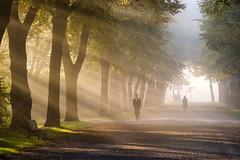 Djurgården, Stockholm, October 15, 2015 (Ulf Bodin) Tags: autumn panorama sun mist man fog se sweden stockholm outdoor walk streetphotography sverige rays höst sunray djurgården dimma stockholmslän canoneosm3 canonefm55200mmf4563isstm