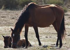 CABALLOS (EL VIAJERO MOTERO) Tags: travel naturaleza nature nationalgeographic caballos canon