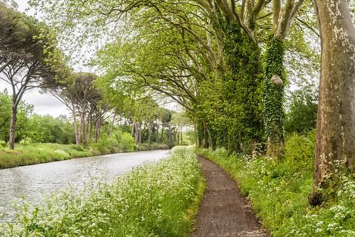 Canal Path 8378.jpg
