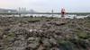 Fluted giant clam (Tridacna squamosa) (wildsingapore) Tags: pulau tekukor mollusca bivalvia tridacnidae tridacna squamosa shore singapore marine coastal intertidal seashore marinelife nature wildlife underwater wildsingapore