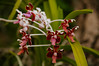 red orchids (Sam Scholes) Tags: garden baliorchidgarden vacation denpasar bali travel indonesia id