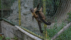 Paramaribo Zoo monkeys