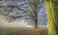 Abington Park Winter Mist (Darwinsgift) Tags: abington park winter mist fog northampton uk england trees hdr photomatix pce nikkor 24mm f35 d ed mf nikon d810
