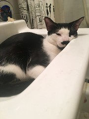 Baby Chaps in a Sink (C Merry) Tags: catsinsinks catinsink kitteninsink sinks cats buzzfeed buzzfeedanimals buzzfeedcommunity