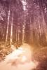Waldweg (Bugtris) Tags: strasse 2470f4l teiltönung weg canon landschaft wald 5dmkiii