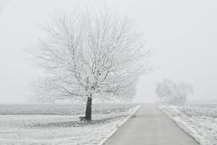 Road to the fairy tales (pro.henrik) Tags: fs170115 fotosondag tomte