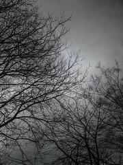 54/365 (efsb) Tags: 54365 project365 2017inphotos 2017yip trees stormdoris