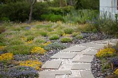 Down the Garden Path (YChoi) Tags: garden australiagarden flowers path
