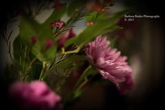 Just a Little Pink (RedHatGal: Barbara Butler/FireCreek Photography) Tags: flower pink bouquet stilllife burgundy flowerarrangement greenery barbarabutlerphotography firecreekphotography redhatgal