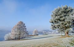 Serie Bostalsee 4 (thorvonasgard) Tags: winter schnee eis kälte frost bostalsee cold ice snow