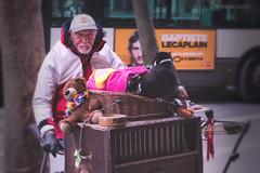 suonatore di carillon (sanino fabrizio) Tags: suonatore carillon artista strada musicista uomo gatto animale peluche carrello carretto strumento musicale street photography parigi francia citta canon 550d