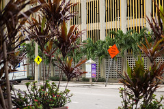 See the Signs (Michael Goldrei (microsketch)) Tags: photo december trees road sign plants street festival 2016 roadsigns mp dec typ240 m florida photos type type240 photographer typ st 240 photography roadsign 16 leica miami signs fl downtown
