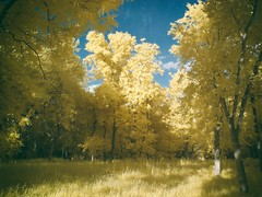 The Golden Hour (Graustark) Tags: canong3 ir 590nm nik trees