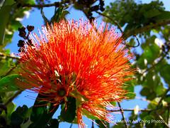 Ulu La'au Park (macprohawaii) Tags: waimea kamuela hawaii bigisland park canona520