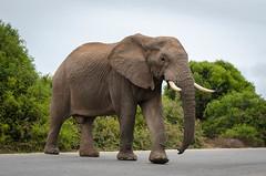 Priorité au piéton.jpg (BoCat31) Tags: afrique faunesauvage voyage
