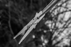 Wood clothespins (Resad Adrian) Tags: wood clothespins nikon close up hang 35mm lens bw bnw black white
