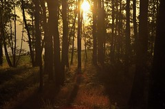 Bosque al atarceder