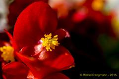 10092015_Flowers_04
