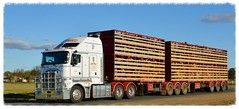 Wood (quarterdeck888) Tags: nikon flickr tipper sheep country transport frosty semi lorry trucks express freight workingtrucks kw overnight kenworth tractortrailer semitrailer movingpictures quarterdeck bigrigs movingvehicles aerodyne roadtransport k200 livestocktransport bdouble kingcab tautliner stockcrate d7100 highwaytrucks australiantrucks truckphotos expressfreight australiantransport roadfreight bigcab haysheepsale jerilderietruckphotos jerilderietrucks outbacktrucks