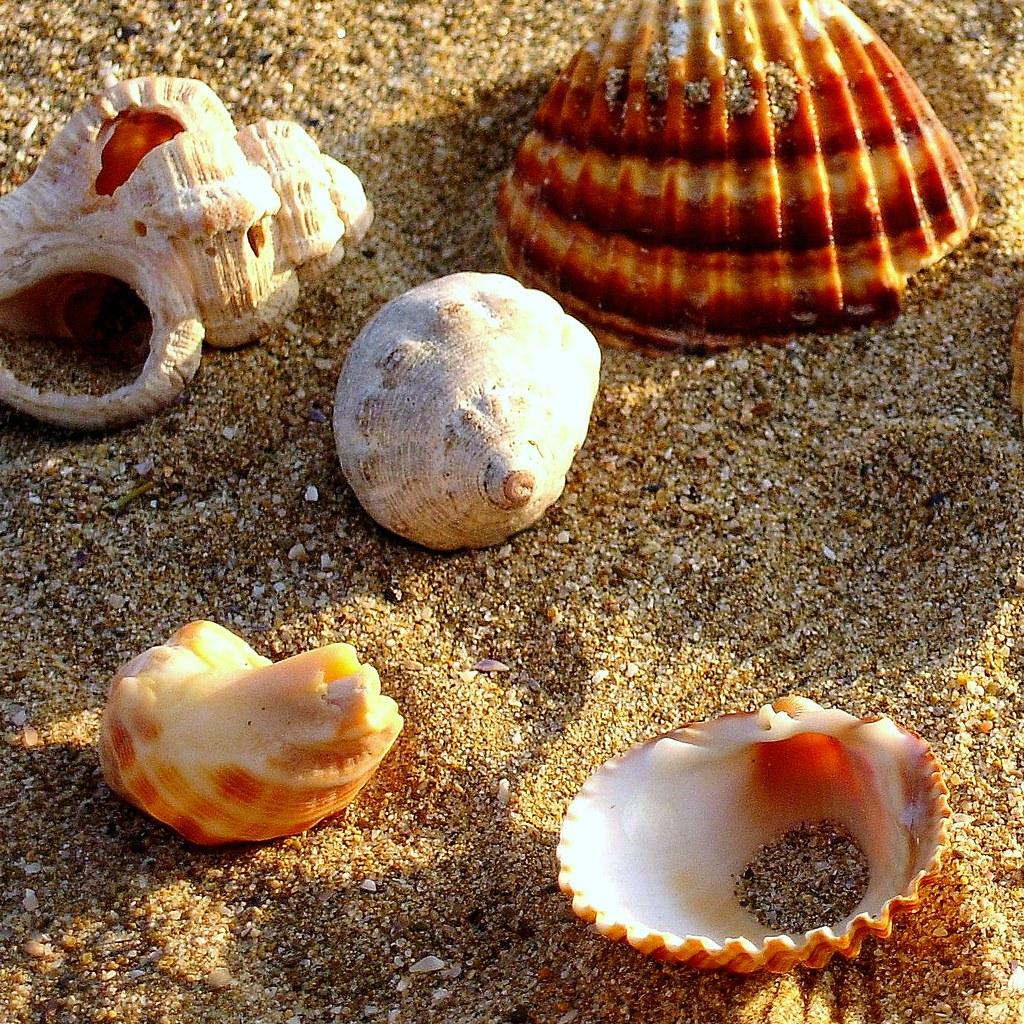 Resultat d'imatges de petxines platja