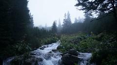 Paraul Valea Rea (Sorin Sfrlogea) Tags: retezat montaniard