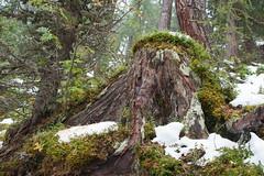 Nationalpark Hohe Tauern in der Umgebung der Rudolfshtte am Weisee-bw_20150926_2691.jpg (Barbara Walzer) Tags: uttendorf nationalparkhohetauern weissee gletscherwelt berghotelrudolfshtte weisseegletscherwelt alpinzentrumrudolfshtte 260915
