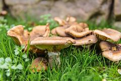 Setas (keudell) Tags: rural bosque otoño roja bierzo sigma1750